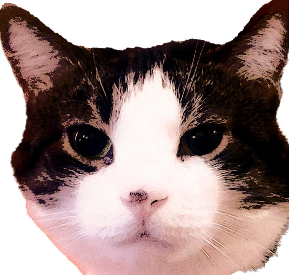 Kmeo The Meow logo